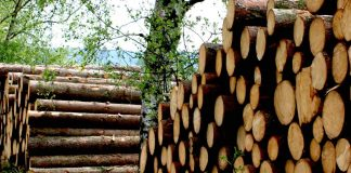 české lesy
